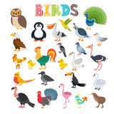 Ejemplo del vector del diferente tipo de pájaros Historieta linda bir ilustración del vector