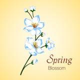 Ejemplo del vector del flor de la primavera Imagen de archivo libre de regalías
