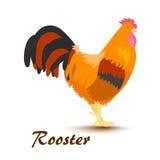 Ejemplo del vector del gallo colorido Imágenes de archivo libres de regalías