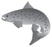 Ejemplo del vector del Grayscale de la trucha de arroyo Foto de archivo libre de regalías