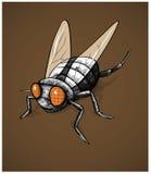 Ejemplo del vector del insecto de la mosca Imagen de archivo