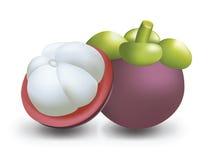 Ejemplo del vector del mangostán Imagen de archivo libre de regalías