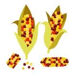 Ejemplo del vector del maíz del pedernal o del calicó Mazorca del oído del maíz Foto de archivo