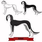 Ejemplo del vector del perro del lebrel Imágenes de archivo libres de regalías