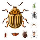 Ejemplo del vector del icono del insecto y de la mosca Sistema del ejemplo común del vector del insecto y del elemento libre illustration