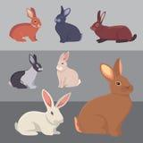 Ejemplo del vector razas de los conejos de la historieta de diversas Bunnys finos para el diseño veterinario ilustración del vector