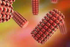 Ejemplo del virus de rabia Imágenes de archivo libres de regalías