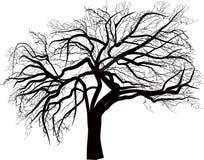 Ejemplo descubierto grande aislado del árbol stock de ilustración