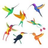 Ejemplo determinado del vector del pequeño colibrí del pájaro en el fondo blanco Imagen de archivo