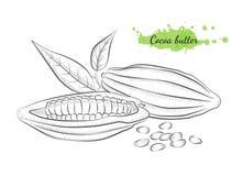 Ejemplo dibujado mano aislado del vector del cacao Imágenes de archivo libres de regalías