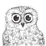 Ejemplo dibujado mano común del búho del vector Fotografía de archivo libre de regalías
