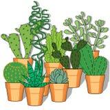 Ejemplo dibujado mano con los cactus Foto de archivo