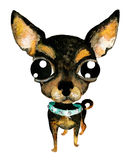 Ejemplo dibujado mano de la acuarela (ningún trazo) Perro lindo de la chihuahua Imagenes de archivo