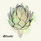 Ejemplo dibujado mano de la alcachofa del vector Colección de la comida Imagen de archivo