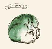 Ejemplo dibujado mano de la pimienta Fotografía de archivo
