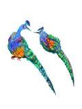 Ejemplo dibujado mano del diseño de la pintura de la acuarela del pavo real de los pares ilustración del vector