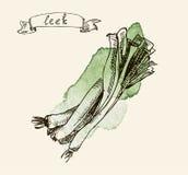 Ejemplo dibujado mano del puerro Fotografía de archivo libre de regalías