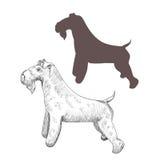Ejemplo dibujado mano del terrier de azul de Kerry Imagen de archivo