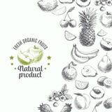 Ejemplo dibujado mano del vector con las frutas y Foto de archivo libre de regalías