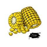 Ejemplo dibujado mano del vector de la mazorca de maíz stock de ilustración