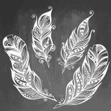 Ejemplo dibujado mano del vector de la pluma Colección del bosquejo El sistema grabado del estilo del garabato plumes en fondo de Foto de archivo