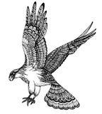 Ejemplo dibujado mano del vector del águila decorativa stock de ilustración