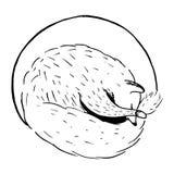 Ejemplo dibujado mano del vector del estilo de la historieta con el zorro el dormir, animal lindo Imágenes de archivo libres de regalías