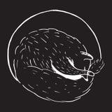 Ejemplo dibujado mano del vector del estilo de la historieta con el zorro el dormir, animal lindo Fotos de archivo libres de regalías