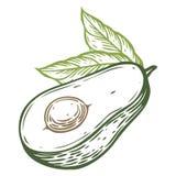 Ejemplo dibujado mano del vector del vector de la rebanada de aguacate Estilo grabado fruta tropical del verano Dibujo detallado  Imagen de archivo