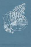 Ejemplo, dibujo lineal de una cáscara Fotografía de archivo