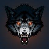 Ejemplo enojado del lobo Foto de archivo