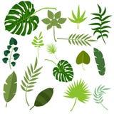 Ejemplo exótico del vector de la hoja del verde de la selva de las hojas del verano tropical de la palma Fotografía de archivo