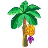 Ejemplo exótico del vector de la planta del plátano aislado en blanco stock de ilustración