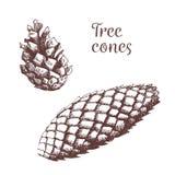 Ejemplo exhausto de la mano del vintage del elemento del otoño Ejemplo botánico Conos del árbol libre illustration