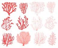 Ejemplo exhausto de la mano determinada coralina ilustración del vector