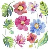 Ejemplo floral de la acuarela Elemento decorativo floral Fotografía de archivo