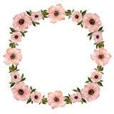 Ejemplo floral del marco Flores rosadas hermosas con las hojas verdes Modelo redondo en el fondo blanco con el espacio para su te Foto de archivo