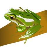 Ejemplo grande EPS 10 del vector de la rana verde fotografía de archivo libre de regalías