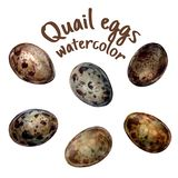 Ejemplo Handdrawn de los huevos de codornices en aislante de la acuarela del estilo en blanco stock de ilustración