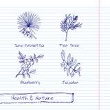 Ejemplo Handdrawn - sistema de la salud y de la naturaleza Foto de archivo libre de regalías
