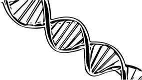 Ejemplo humano del bosquejo de la secuencia de la DNA Foto de archivo