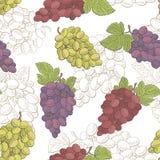 Ejemplo inconsútil del bosquejo del modelo del color gráfico de la fruta de las uvas Imagen de archivo libre de regalías