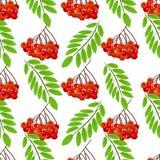 Ejemplo inconsútil del vector del fondo del modelo de la hoja de las bayas del manojo del serbal del árbol del otoño de la fruta  Imagen de archivo libre de regalías