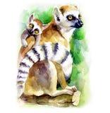 Ejemplo lindo de la acuarela con una mamá del lémur y su cachorro libre illustration