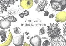 Ejemplo a mano con las frutas Vector fotografía de archivo