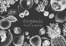 Ejemplo a mano con las frutas Vector foto de archivo