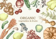 Ejemplo a mano de verduras y de frutas Vector imágenes de archivo libres de regalías