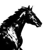 Ejemplo negro del caballo en el blanco Foto de archivo libre de regalías