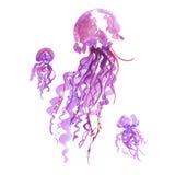 Ejemplo púrpura aislado de la acuarela de las medusas libre illustration