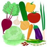 Ejemplo plano de los iconos del vector de las verduras Fotografía de archivo